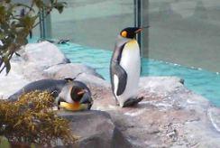 Penguin1_1
